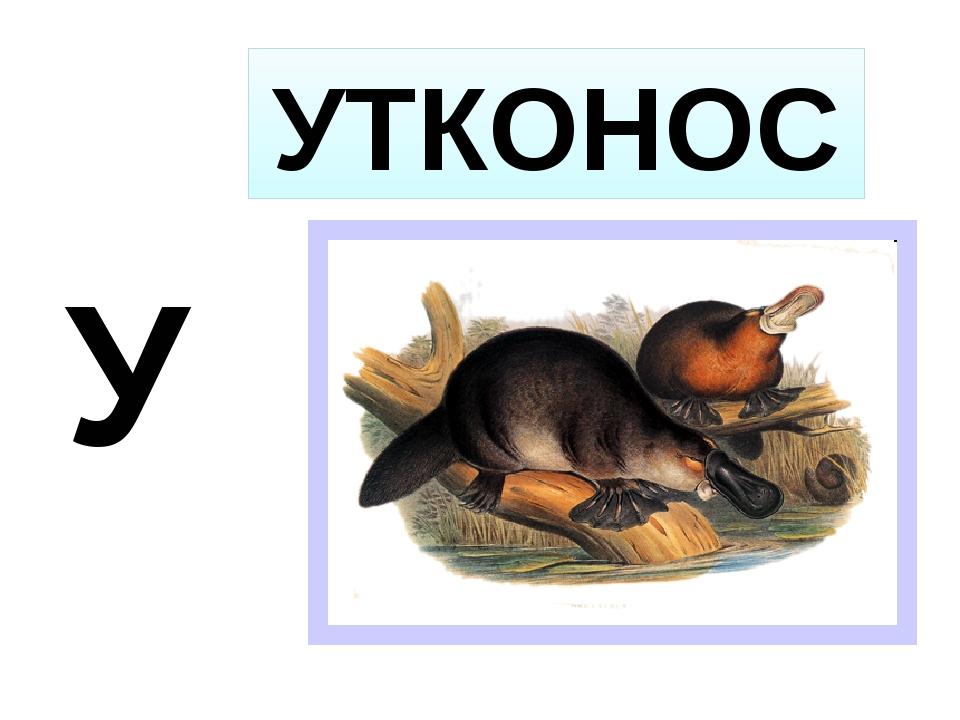 У УТКОНОС