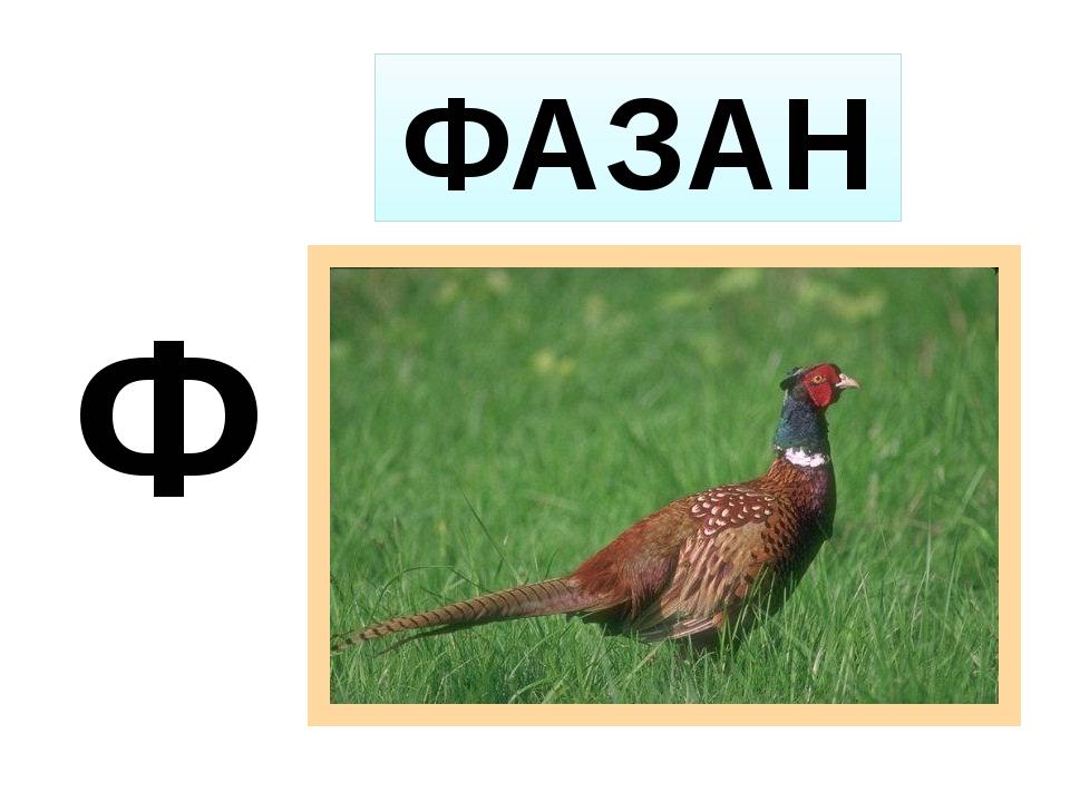 Ф ФАЗАН