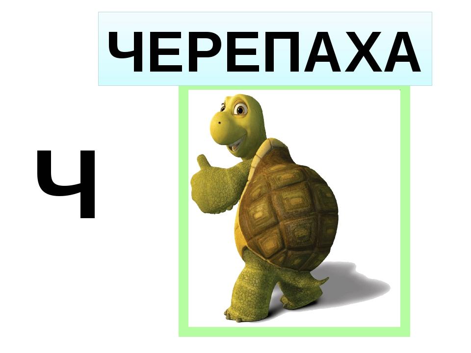 Ч ЧЕРЕПАХА