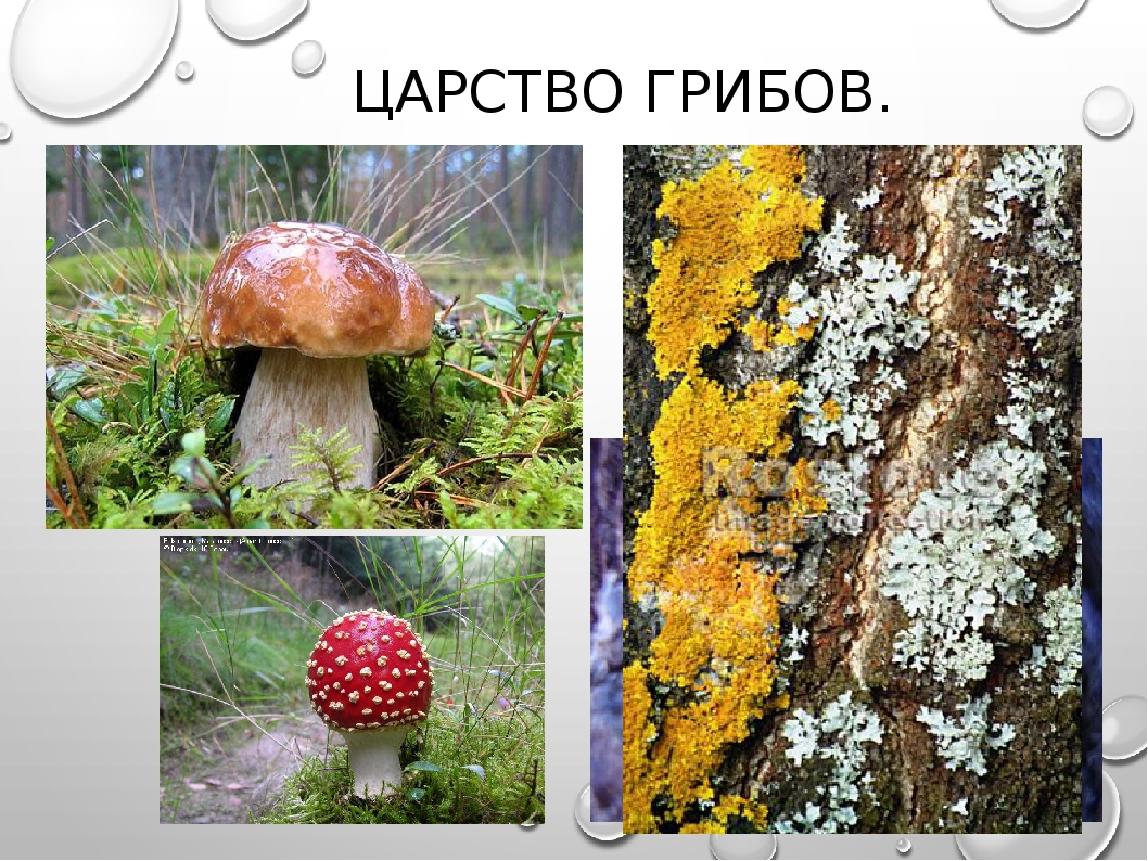 стоит делать царство грибов картинки яичных тальятелле шпинатом