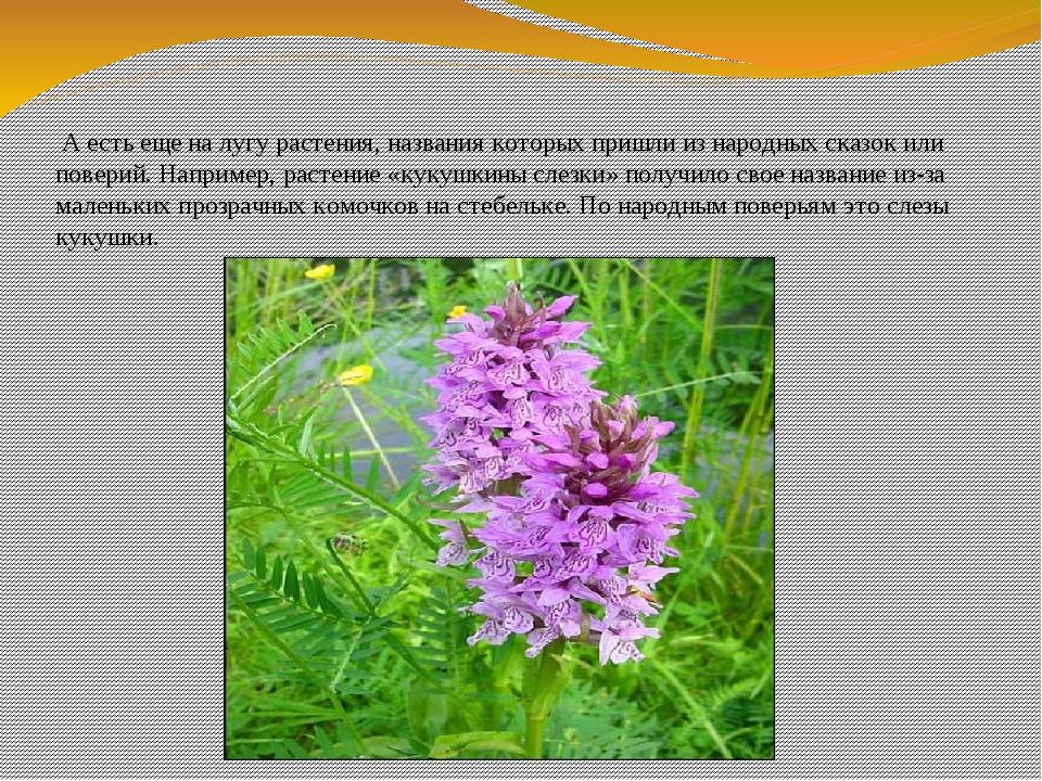 Названия лекарственных растений в картинках