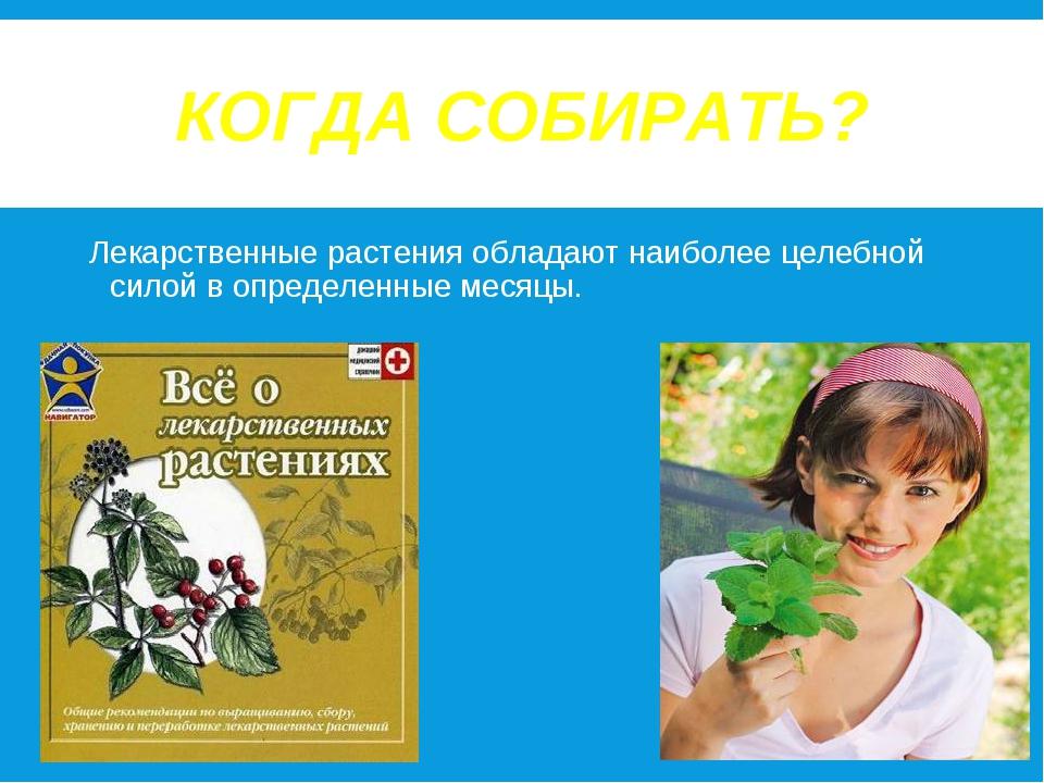 КОГДА СОБИРАТЬ? Лекарственные растения обладают наиболее целебной силой в опр...