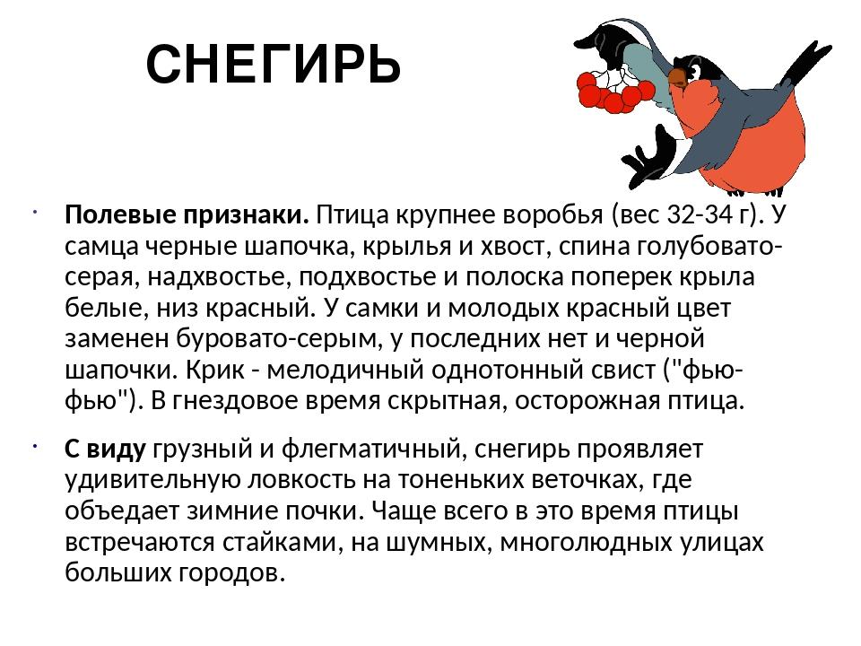 СНЕГИРЬ Полевые признаки. Птица крупнее воробья (вес 32-34 г). У самца черные...