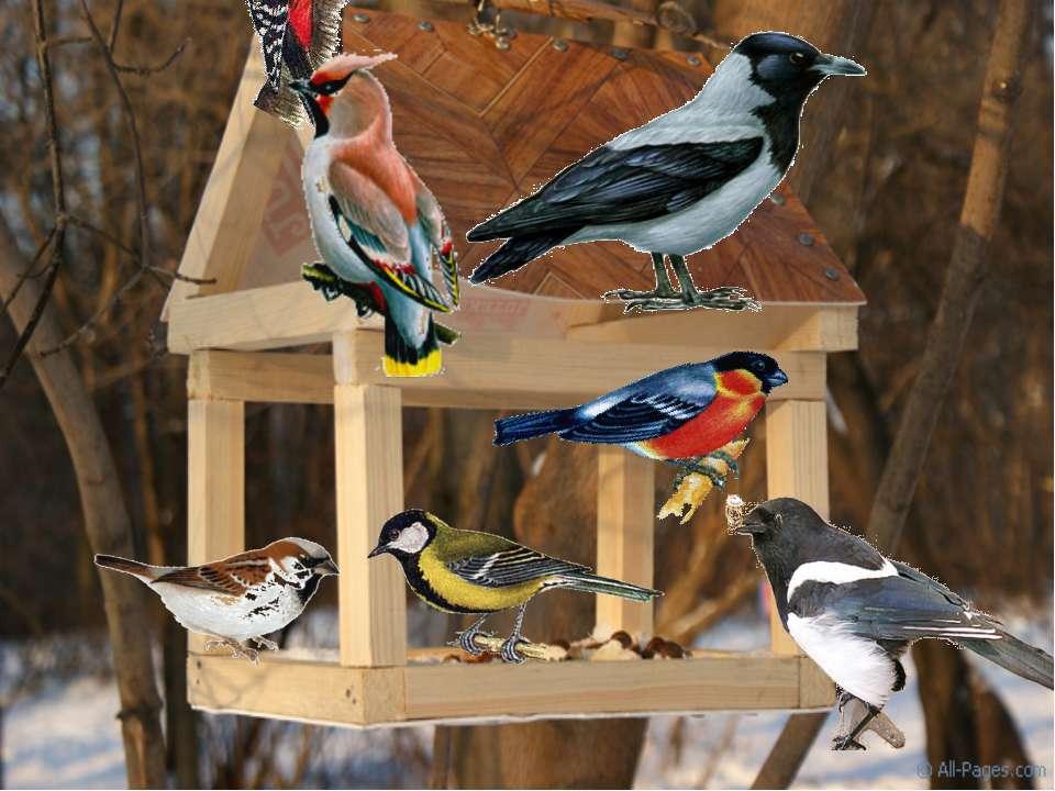 что всякое картинки птиц зимой с названиями часто работали одной