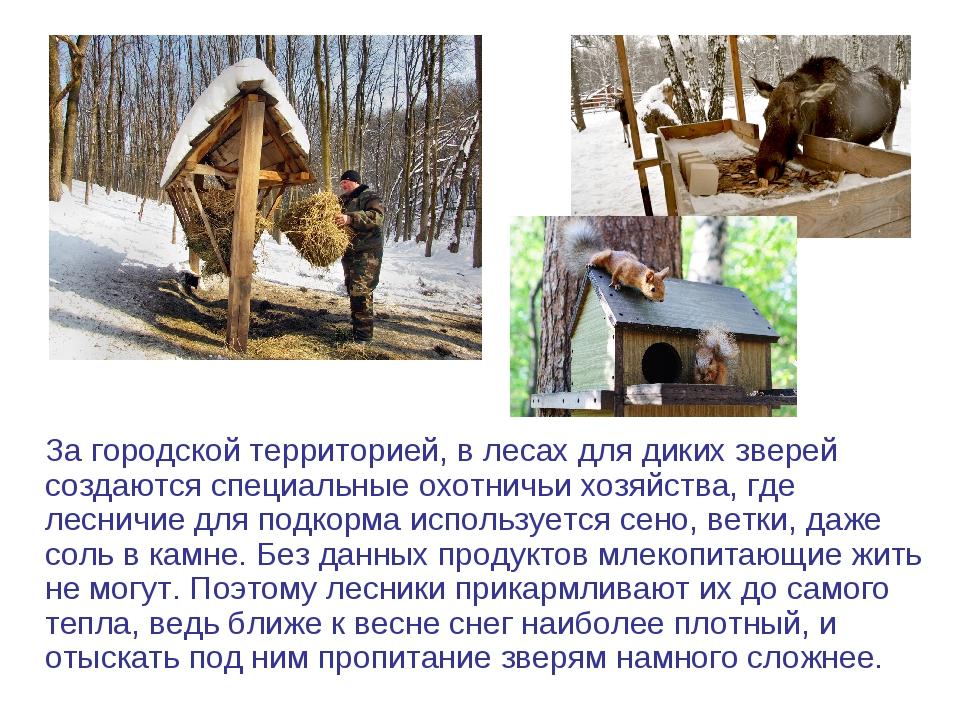 ней картинки на тему помощь животным зимой работа