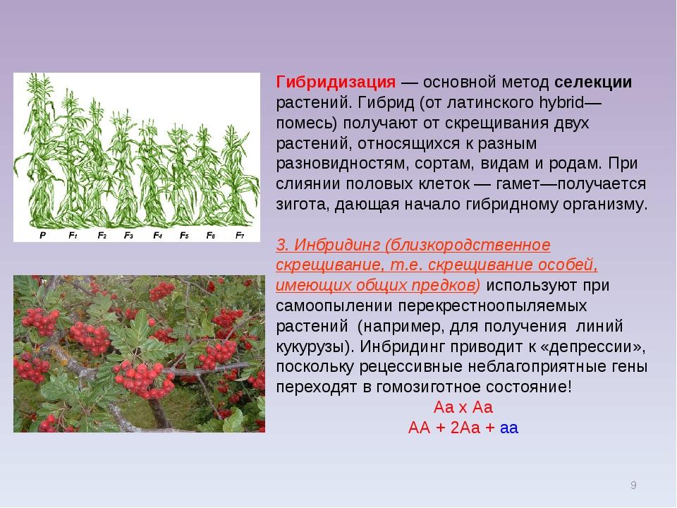 Комнатные растения суккуленты фото и названия мишулин советский