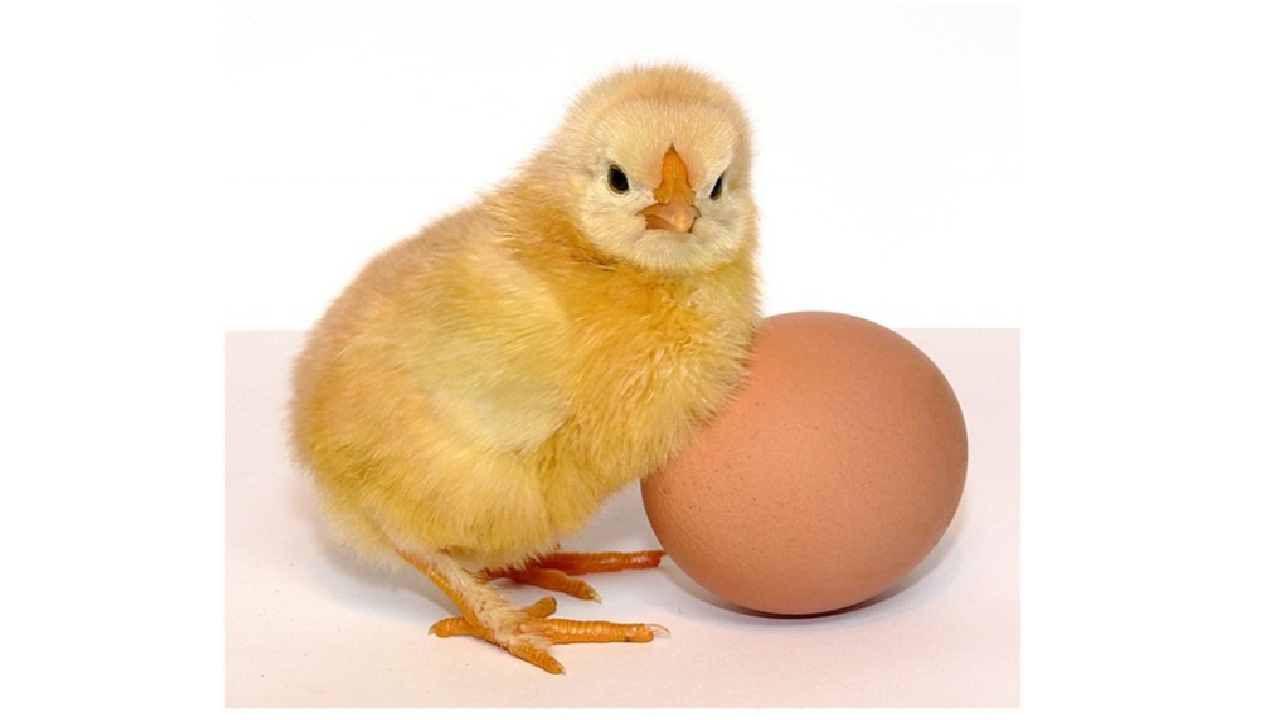 Картинки с днем яйца