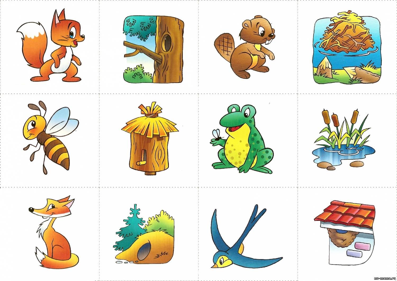 демонстрируют картинки животных для дидактических игр клиента