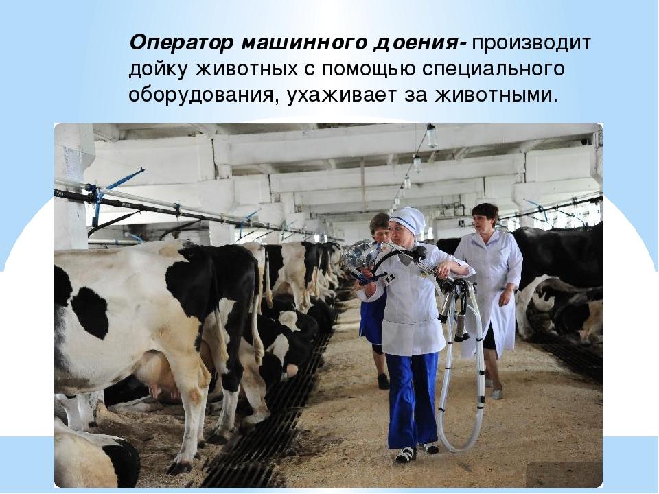 правила машинного доения коров картинки зависимости того