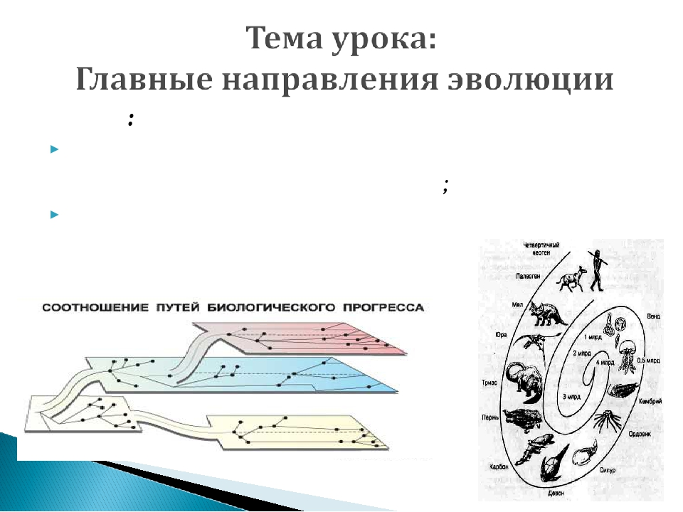 Цели: изучить основные направления эволюционного процесса; научиться различат...