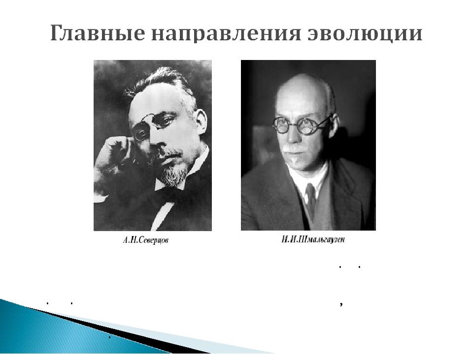 Представители российской школы А. Н. Северцов и И. И. Шмальгаузен говорили о...