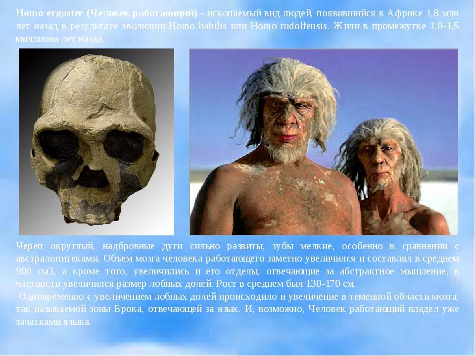 Homo ergaster (Человек работающий) - ископаемый вид людей, появившийся в Афри...