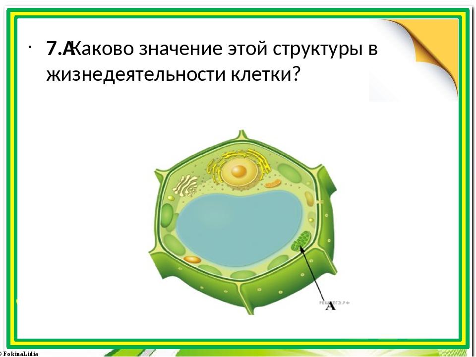 7.Каково значение этой структуры в жизнедеятельности клетки? © FokinaLidia