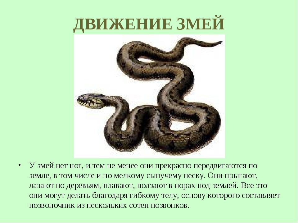 ДВИЖЕНИЕ ЗМЕЙ У змей нет ног, и тем не менее они прекрасно передвигаются по з...