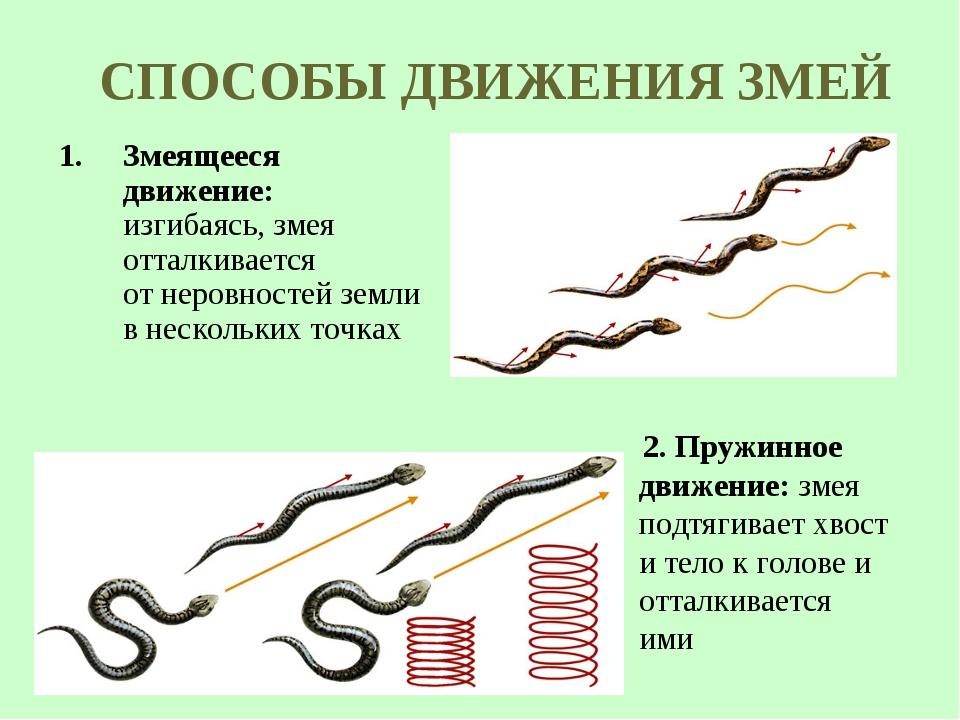 СПОСОБЫ ДВИЖЕНИЯ ЗМЕЙ Змеящееся движение: изгибаясь, змея отталкивается отне...