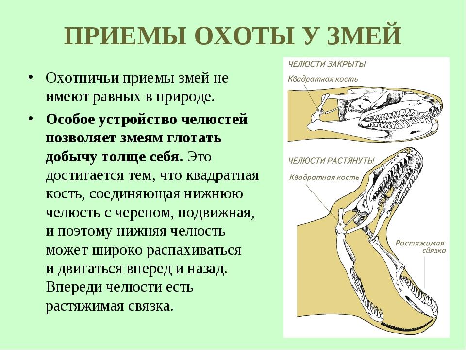 ПРИЕМЫ ОХОТЫ У ЗМЕЙ Охотничьи приемы змей не имеют равных в природе. Особое у...