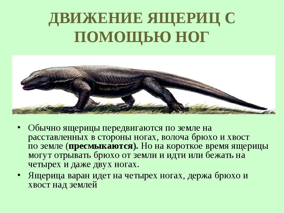 ДВИЖЕНИЕ ЯЩЕРИЦ С ПОМОЩЬЮ НОГ Обычно ящерицы передвигаются по земле на расста...