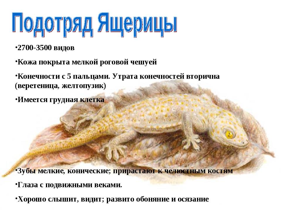 2700-3500 видов Кожа покрыта мелкой роговой чешуей Конечности с 5 пальцами. У...