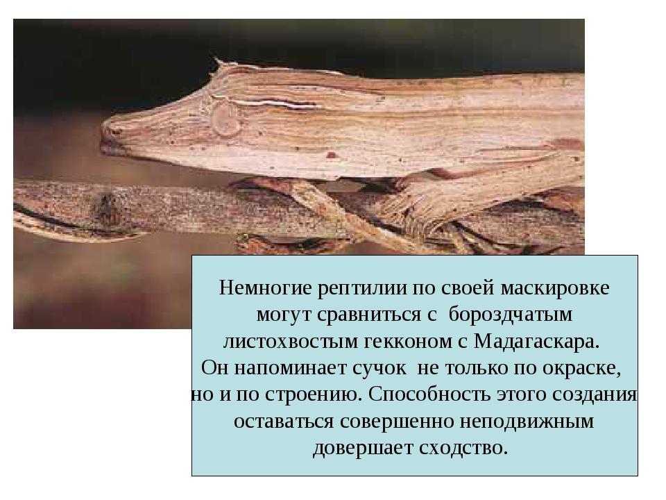 Немногие рептилии по своей маскировке могут сравниться с бороздчатым листохво...