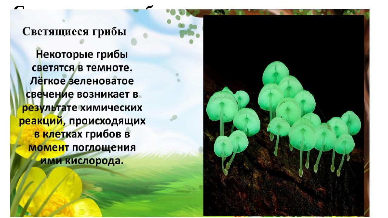 Светящиеся грибы Некоторые грибы светятся в темноте. Лёгкое зеленоватое свече...