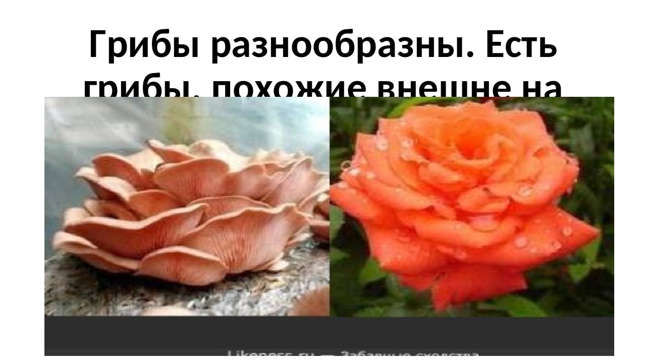 Грибы разнообразны. Есть грибы, похожие внешне на розу,