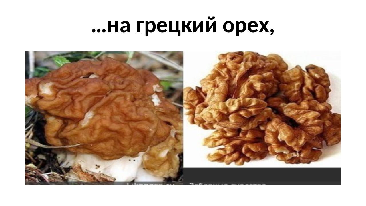…на грецкий орех,