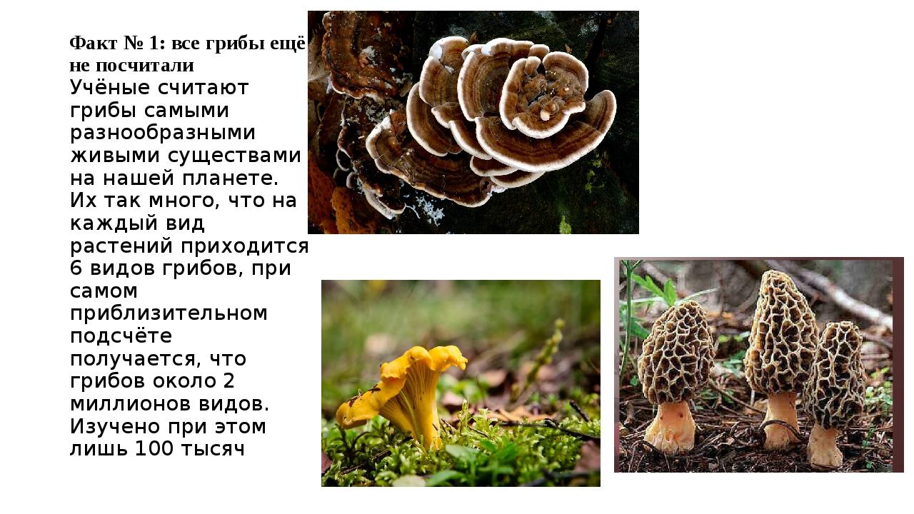 Факт № 1: все грибы ещё не посчитали Учёные считают грибы самыми разнообразны...