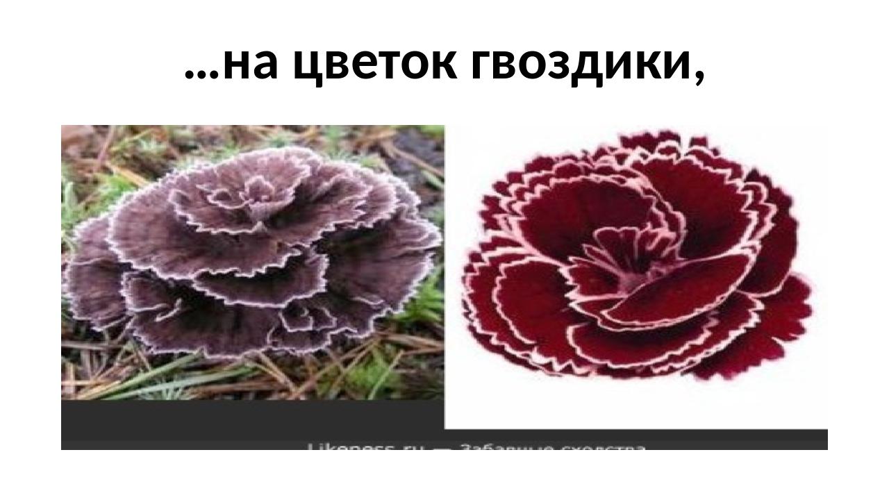 …на цветок гвоздики,
