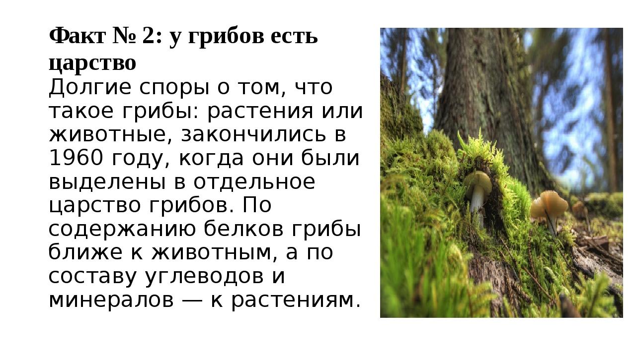 Факт № 2: у грибов есть царство Долгие споры о том, что такое грибы: растения...