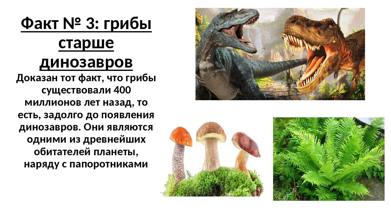 Факт № 3: грибы старше динозавров Доказан тот факт, что грибы существовали 40...