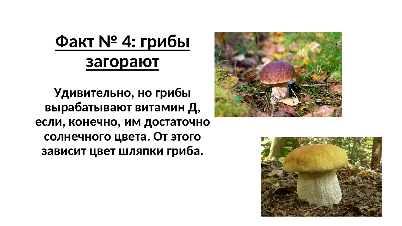 Факт № 4: грибы загорают Удивительно, но грибы вырабатывают витамин Д, если,...