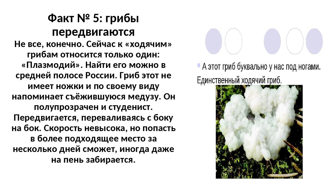Факт № 5: грибы передвигаются Не все, конечно. Сейчас к «ходячим» грибам отно...