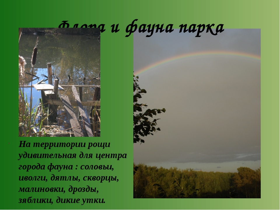 Флора и фауна парка На территории рощи удивительная для центра города фауна :...