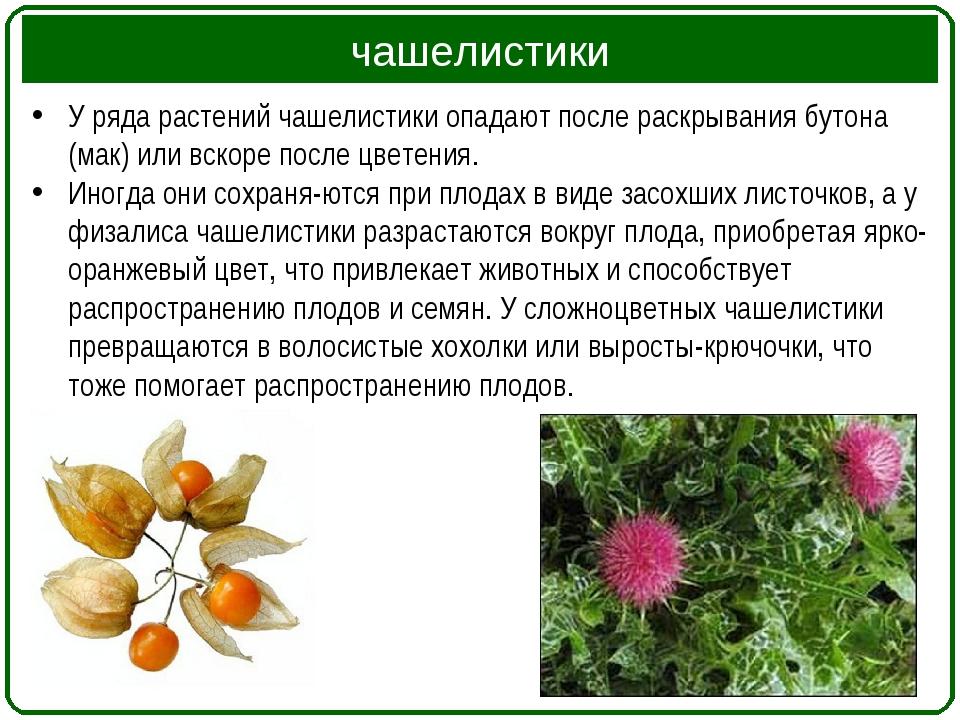 чашелистики У ряда растений чашелистики опадают после раскрывания бутона (мак...