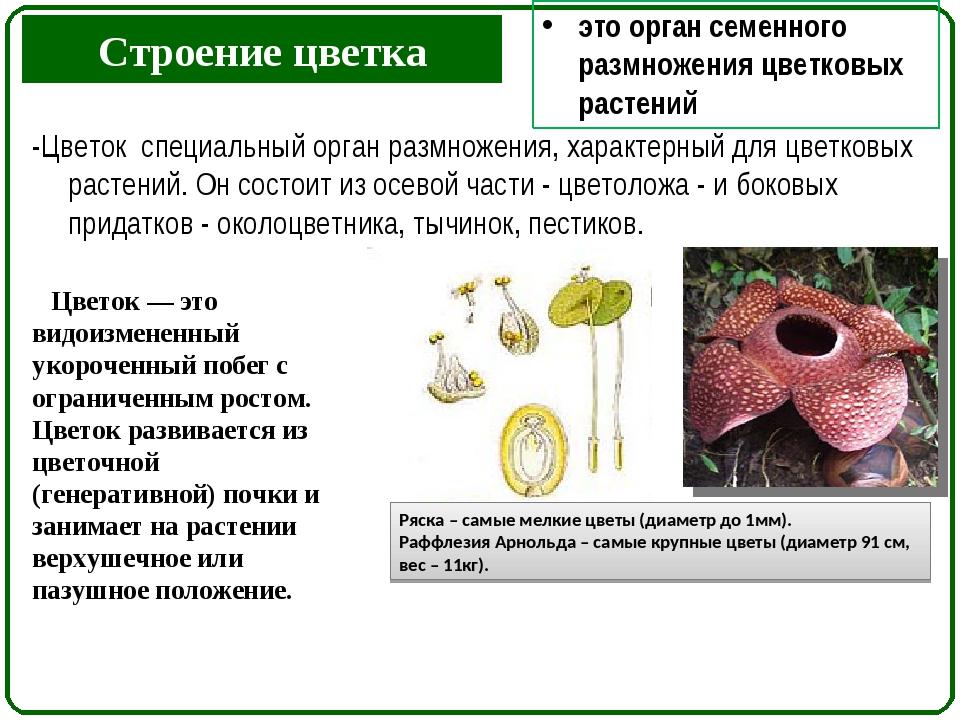 Строение цветка -Цветок специальный орган размножения, характерный для цветко...