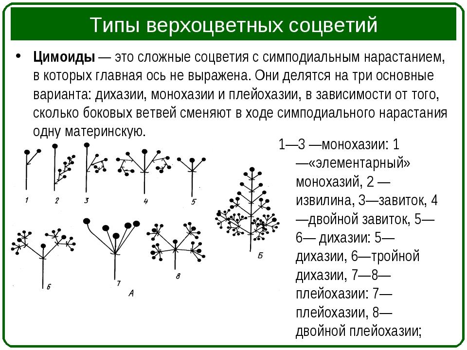 Типы верхоцветных соцветий Цимоиды— это сложные соцветия с симподиальным нар...