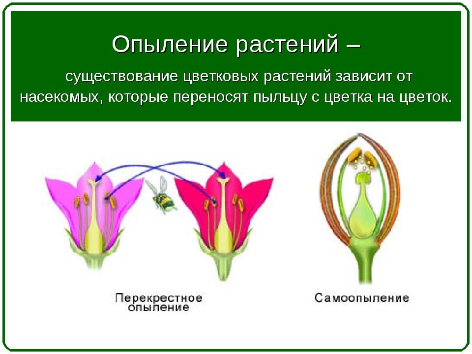 Опыление растений – существование цветковых растений зависит от насекомых, ко...