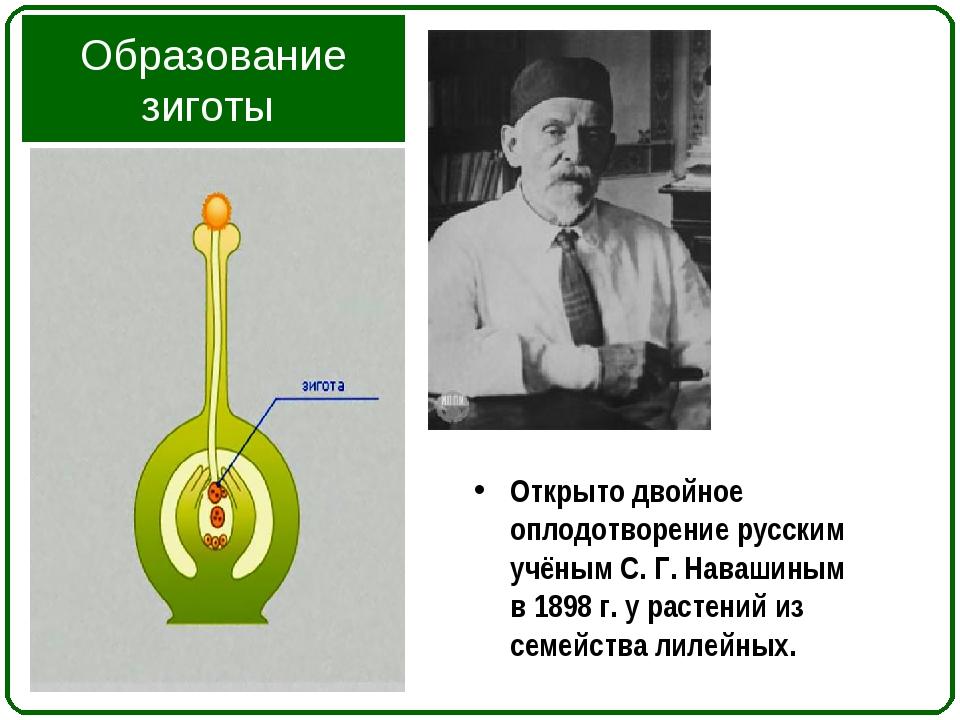 Образование зиготы Открыто двойное оплодотворение русским учёным С. Г. Наваши...