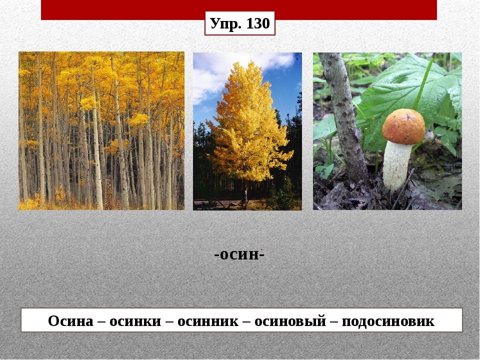 Осина – осинки – осинник – осиновый – подосиновик -осин- Упр. 130