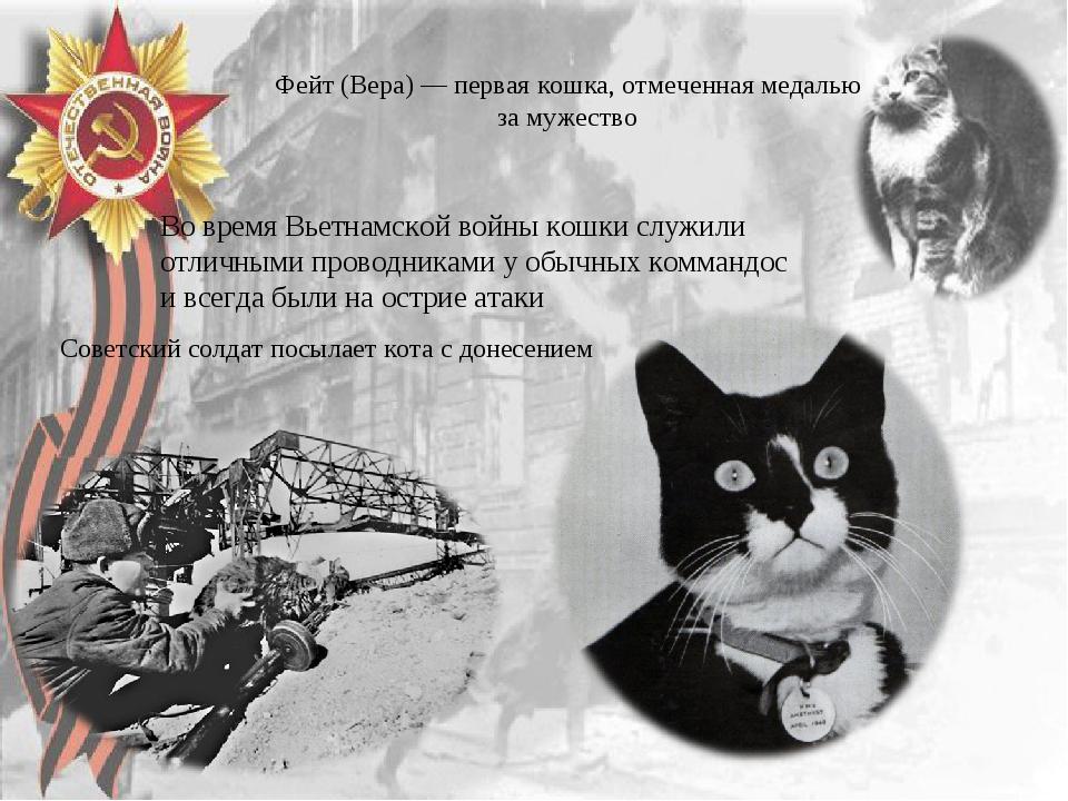 Фейт (Вера) — первая кошка, отмеченная медалью за мужество Советский солдат п...