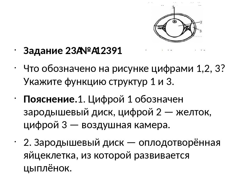 Задание 23№12391 Что обозначено на рисунке цифрами 1,2, 3? Укажите функцию...