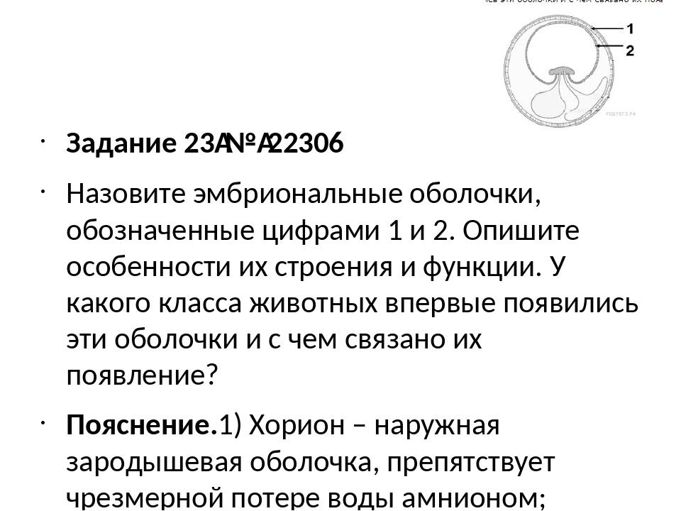 Задание 23№22306 Назовите эмбриональные оболочки, обозначенные цифрами 1 и...