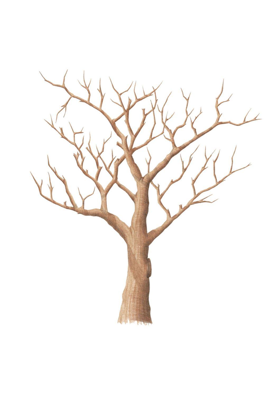 Картинки деревьев без листиков