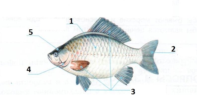 домик картинка части рыбы пистолет браунинг