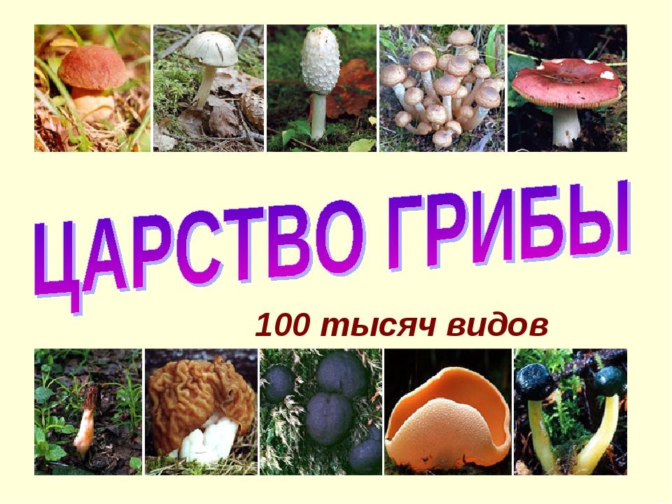 100 тысяч видов