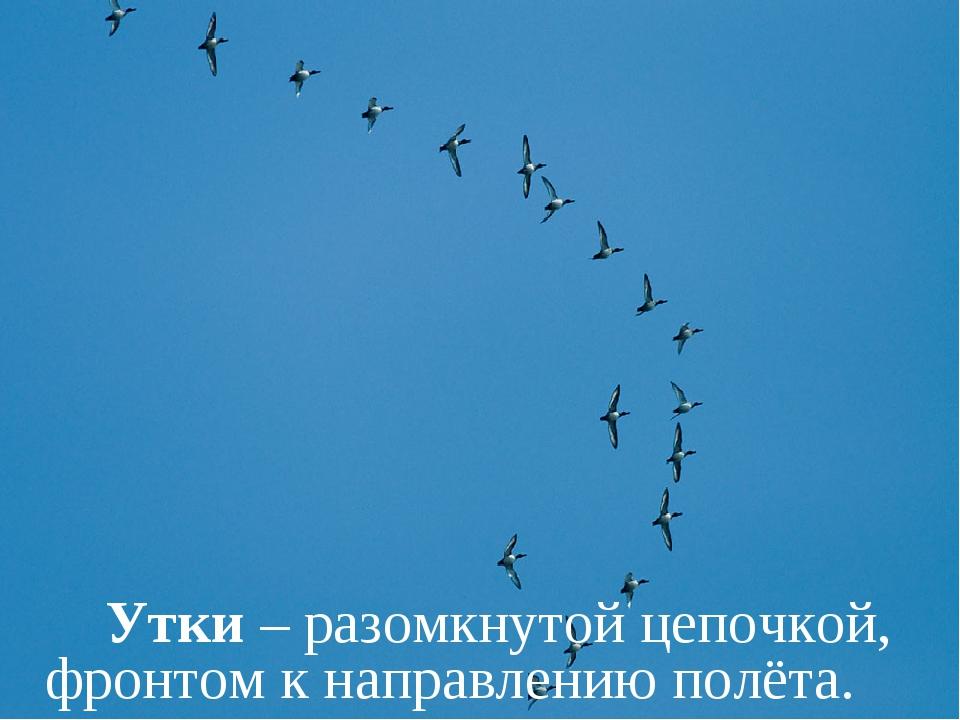 Утки – разомкнутой цепочкой, фронтом к направлению полёта.
