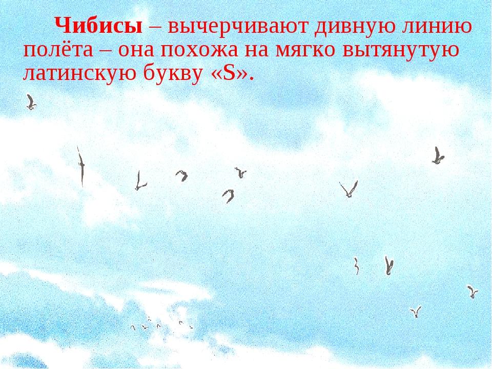 Чибисы – вычерчивают дивную линию полёта – она похожа на мягко вытянутую л...