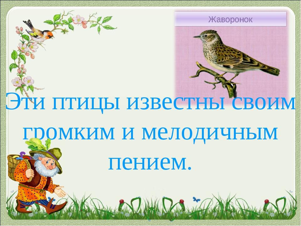 Эти птицы известны своим громким и мелодичным пением.