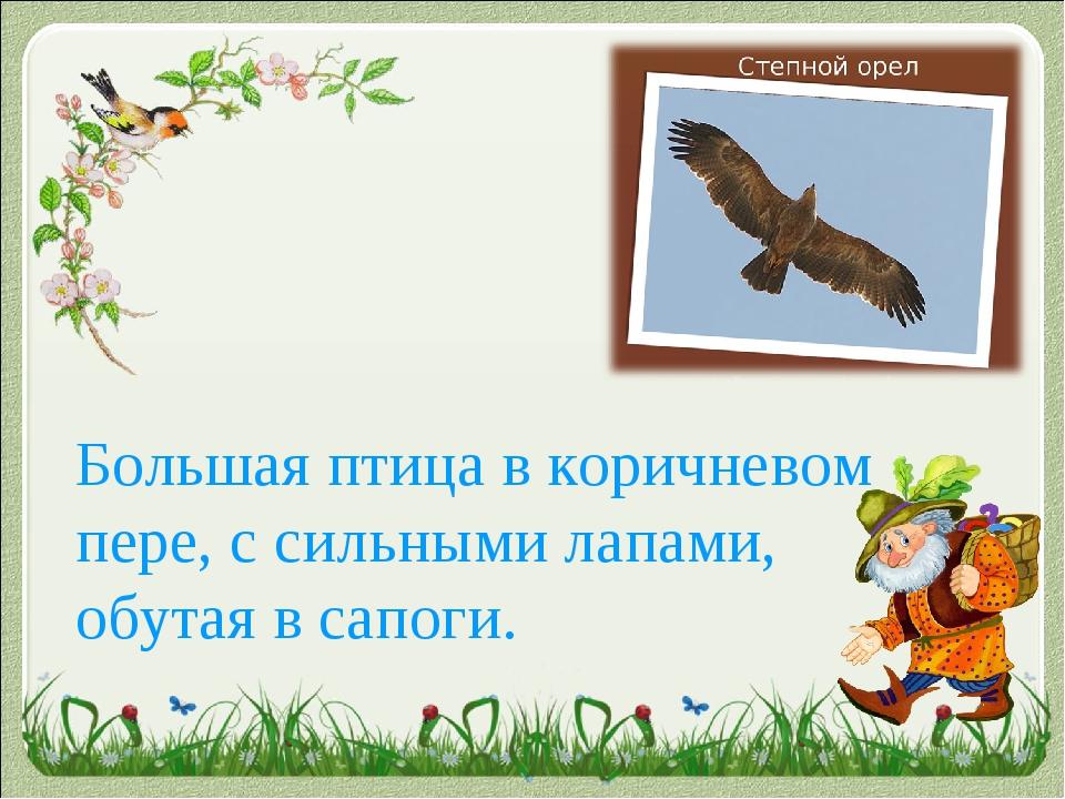 Большая птица в коричневом пере, с сильными лапами, обутая в сапоги.