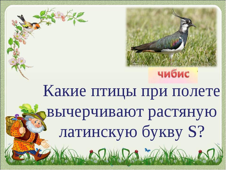 Какие птицы при полете вычерчивают растяную латинскую букву S?